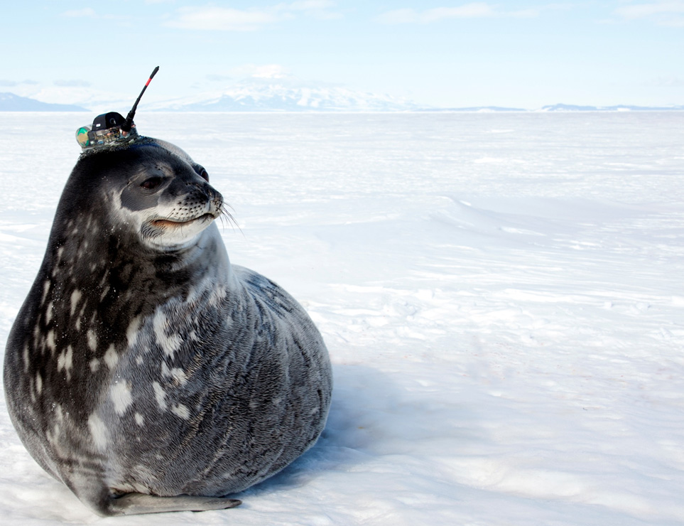 seal with antenna attached